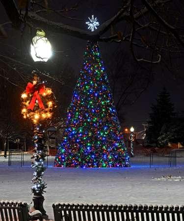 Aberdeen Christmas Tree