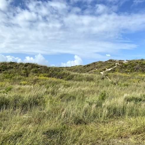 Green grasses grow on dunes below a blue sky