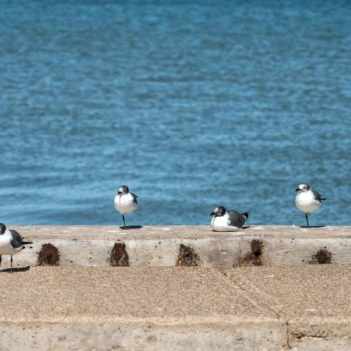 Five seagulls stand in a line along a concrete barrier with the water in the background