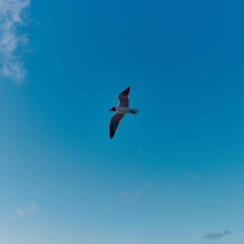 A lone seagull flies in a blue sky
