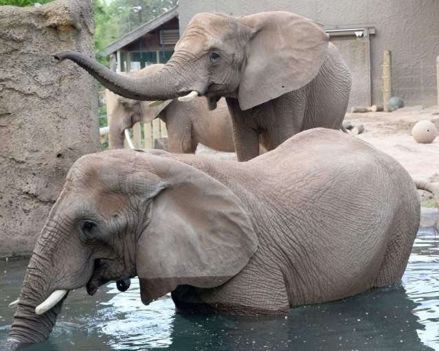 Elephants at Seneca Park Zoo
