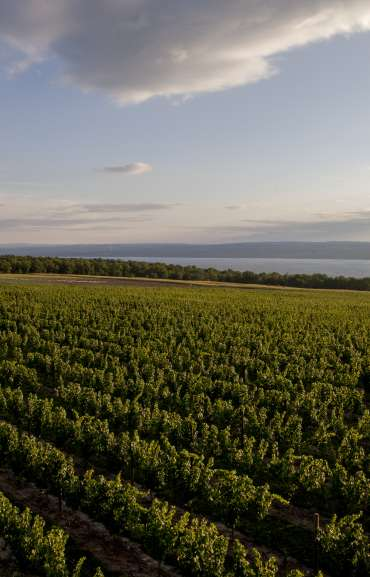 Breathtaking view of Boundary Breaks Vineyards