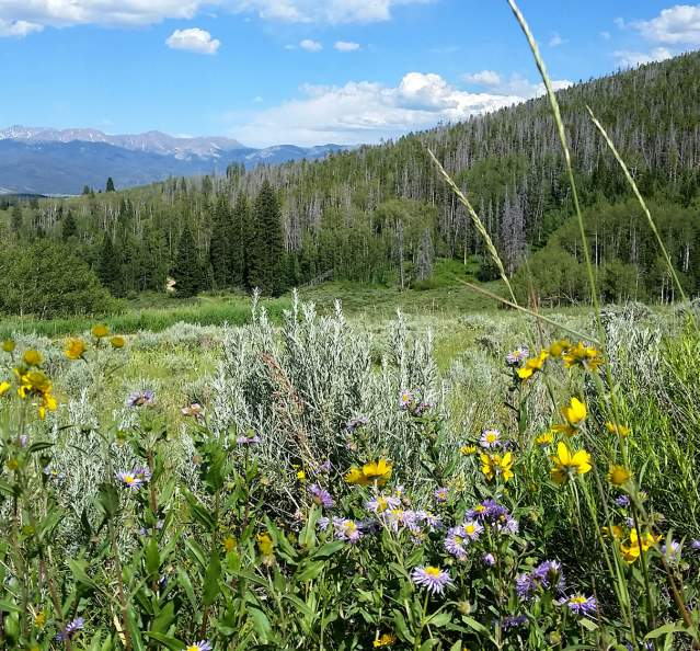 Wildflowers at Snow Mountain Ranch