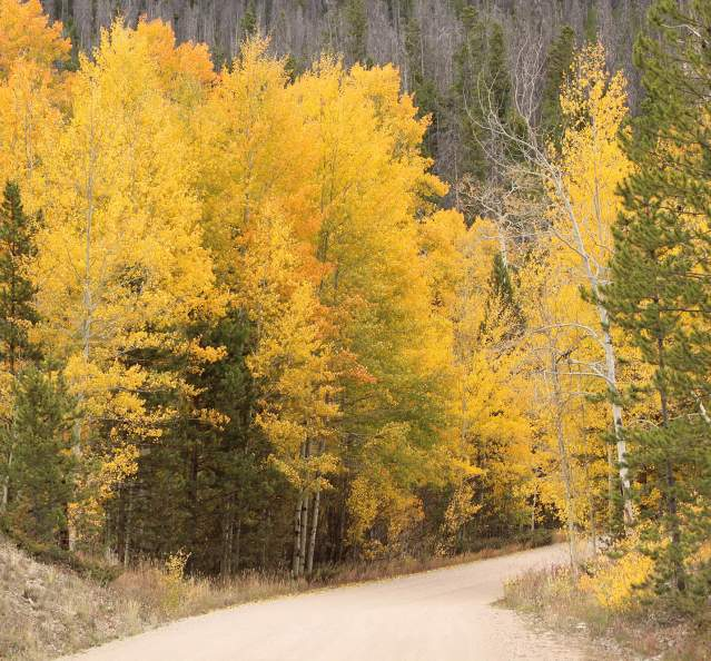 Fall trees lining a dirt road