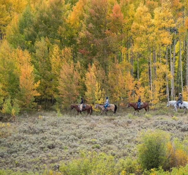Group horsebackriding among fall trees