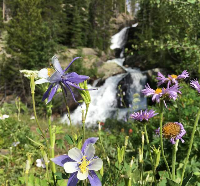 Wildflowers with a waterfall in the background
