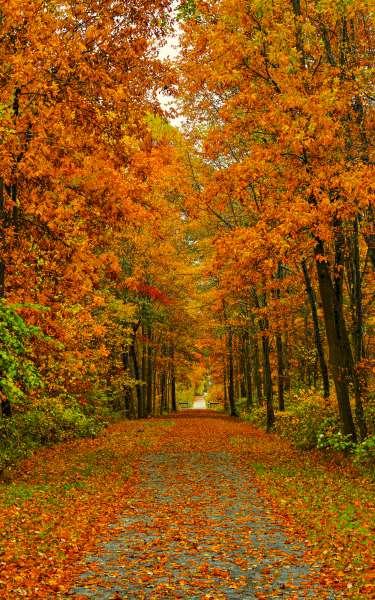 Ma & Pa Trail Fall