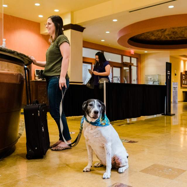 Woman with dog checking in to hotel