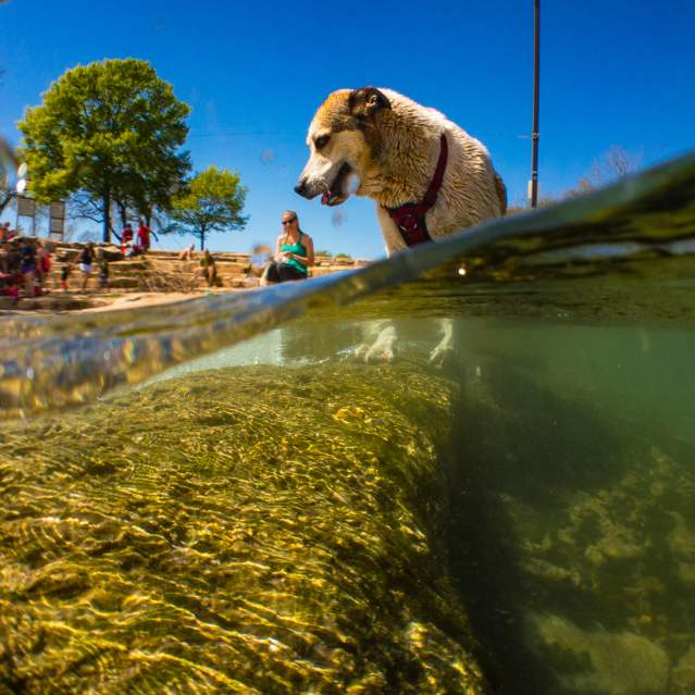 Dog playing in river