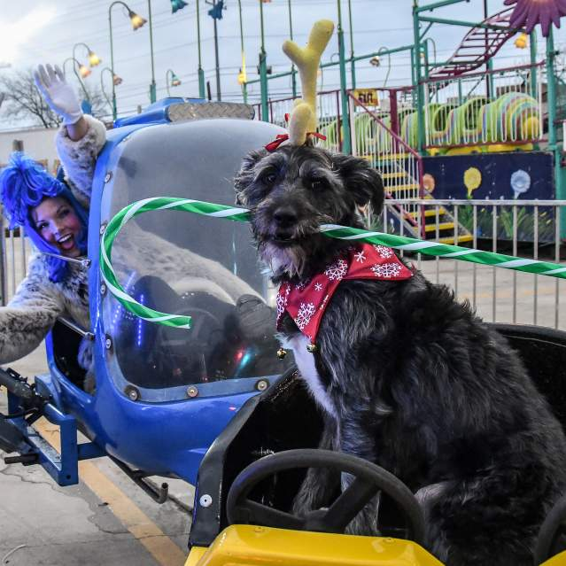 Dog on carnival ride at holiday festival