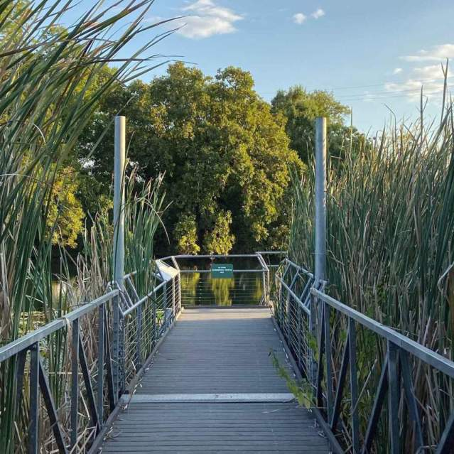 Boardwalk tour through the wetlands