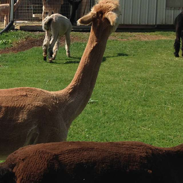 Farm Attractions