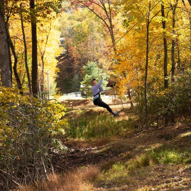 Take in the fall foliage from the treetops