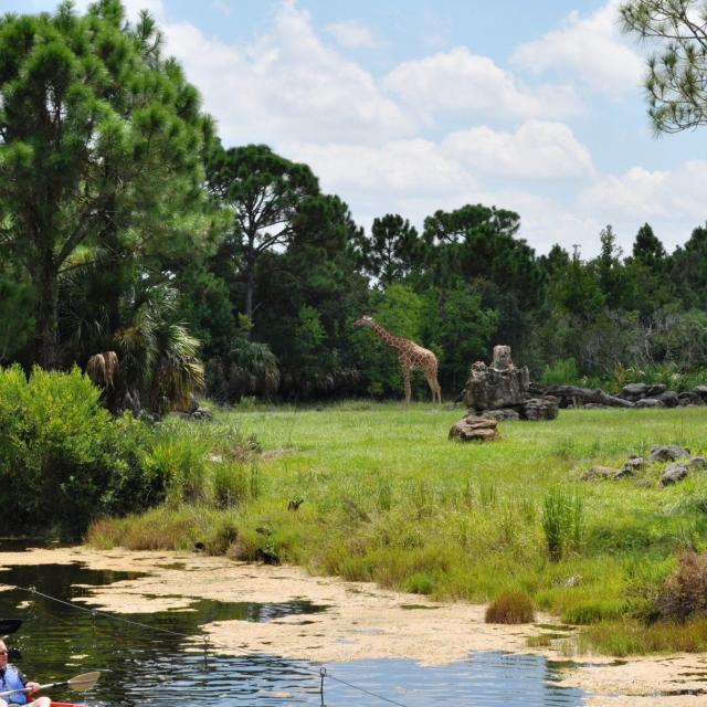 Brevard Zoo kayaking by wildlife