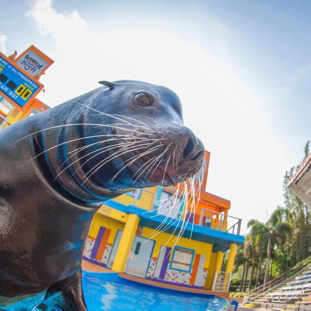 SeaWorld Orlando sea lion high trainer