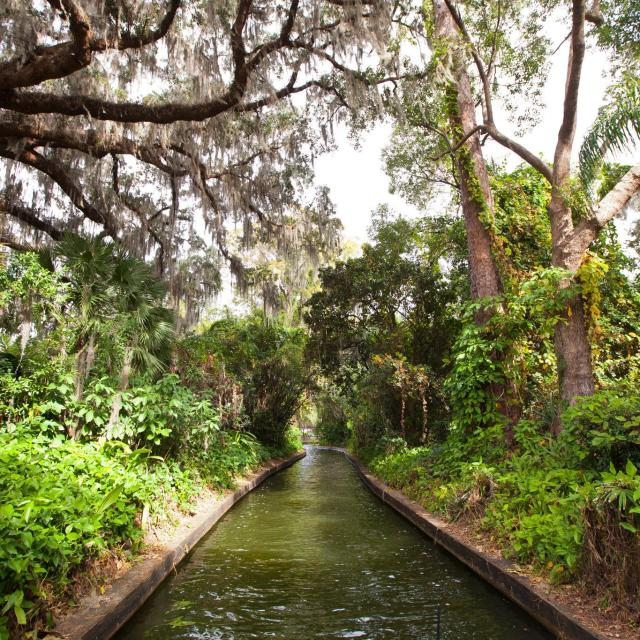 a canal along the Winter Park Scenic Boat Tour