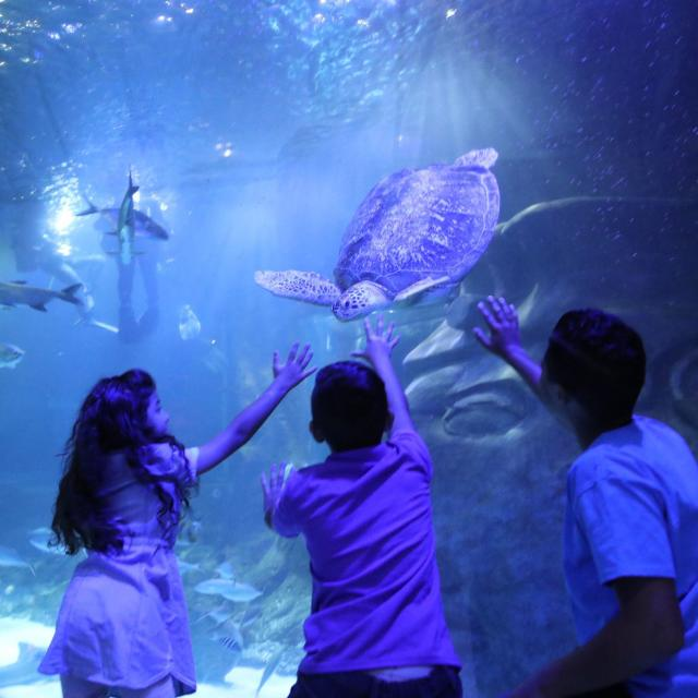 Children look at turtles at SEALIFE Orlando Aquarium
