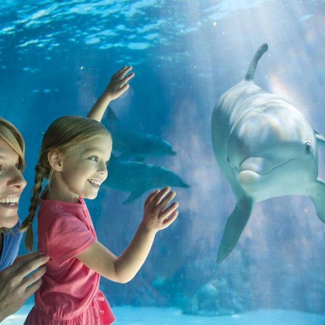 Mom and Daughter looking at a dolphin at SeaWorld Orlando