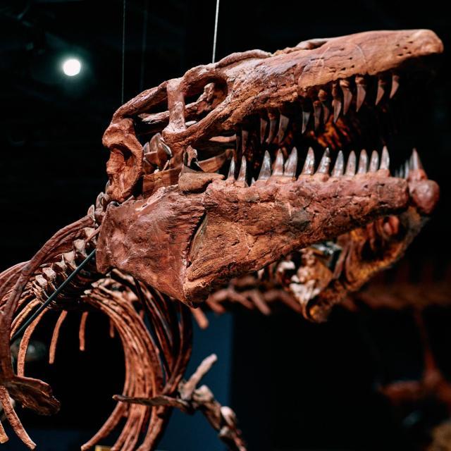 Dinosaur skeleton at the Orlando Science Center