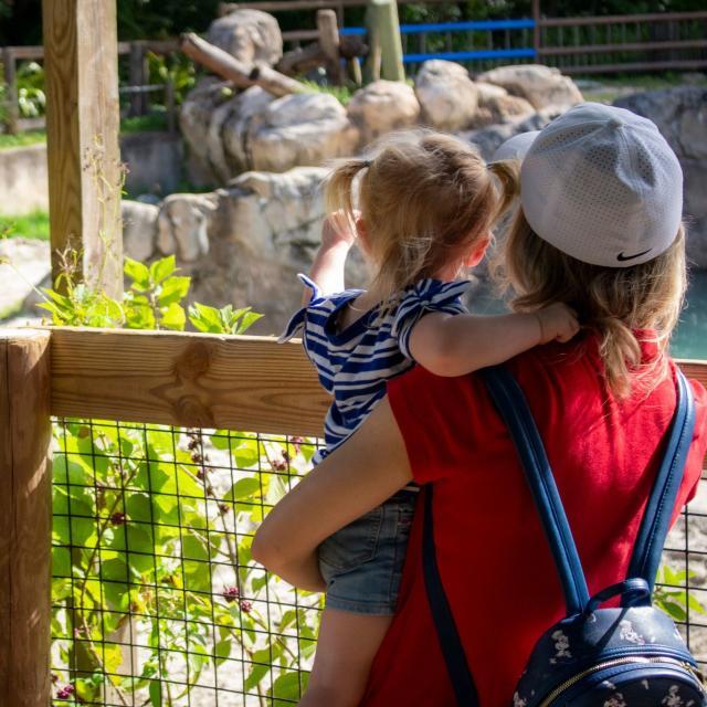 Central Florida Zoo & Botanical Gardens guests looking at rhino