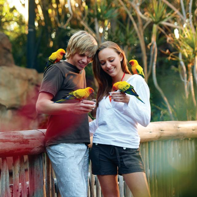 Discovery Cove® teens at aviary