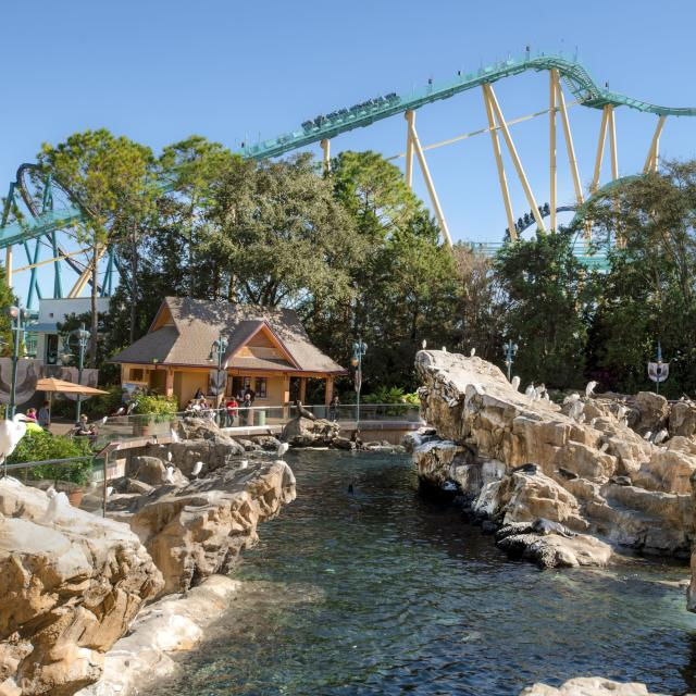 Seals swim and play in the lagoon as the Kraken rollercoaster ride looms in the background at SeaWorld® Orlando