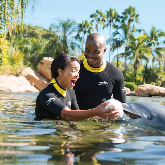 A dolphin helps with a marriage proposal at Discovery Cove.