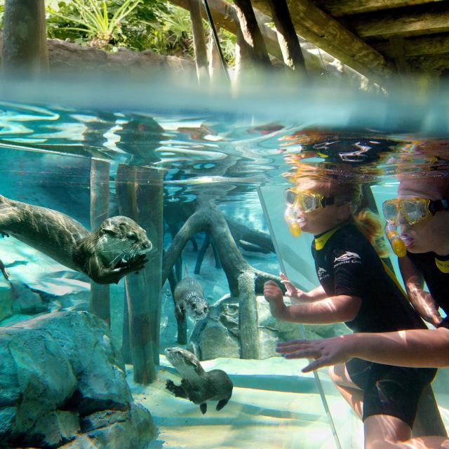 Kids interacting with otters underwater at Discovery Cove