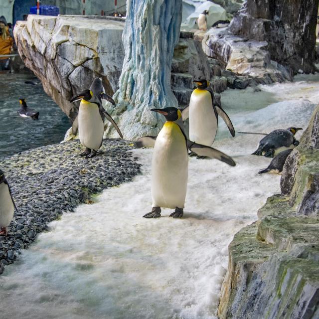 SeaWorld® Orlando penguins antarctica