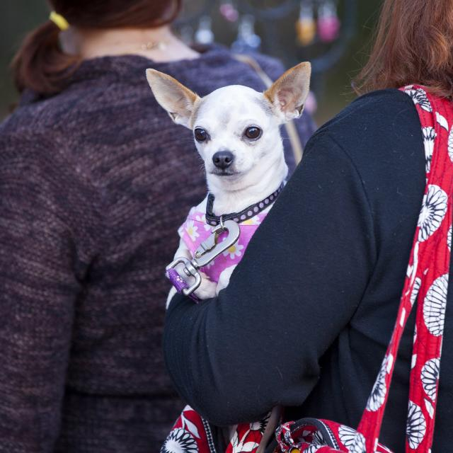 A woman carrying her dog while walking along Lake Eola in Orlando, Florida.