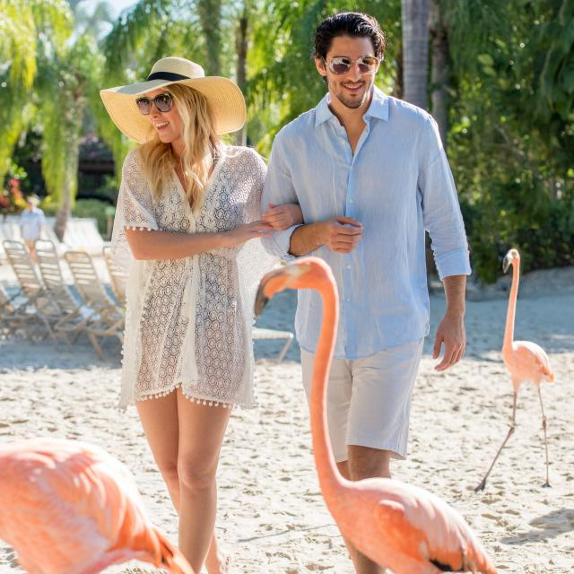 A couple walking on the beach with flamingos at Discovery Cove