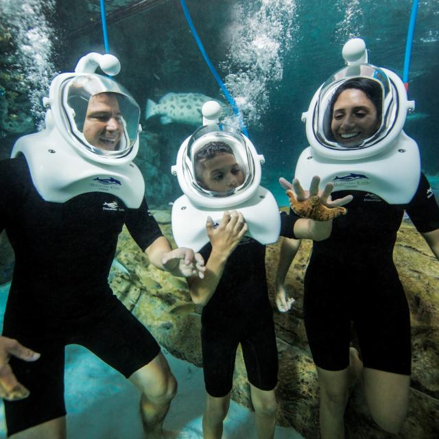 A family of three underwater in diving suits and helmets interact with a starfish at Discovery Cove