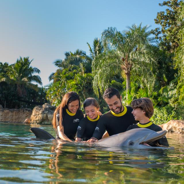A family swimming with a dolphin at Discovery Cove