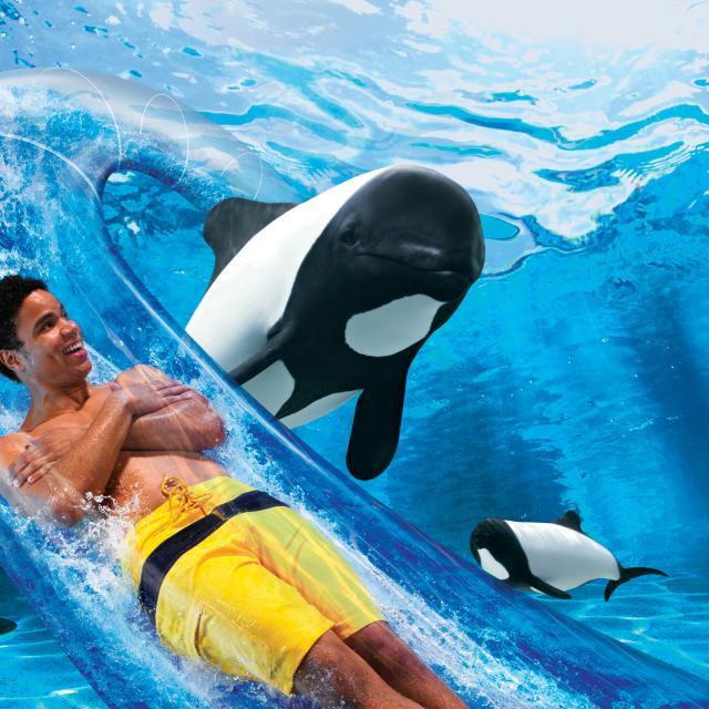 A man slides down Dolphin Plunge at Aquatica Orlando.