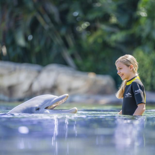 A dolphin greets a young girl at Discovery Cove.