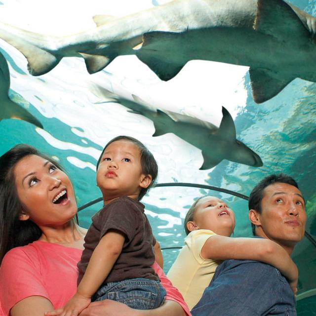 A family in a tunnel looking up at sharks swimming above them at SEA LIFE Orlando Aquarium