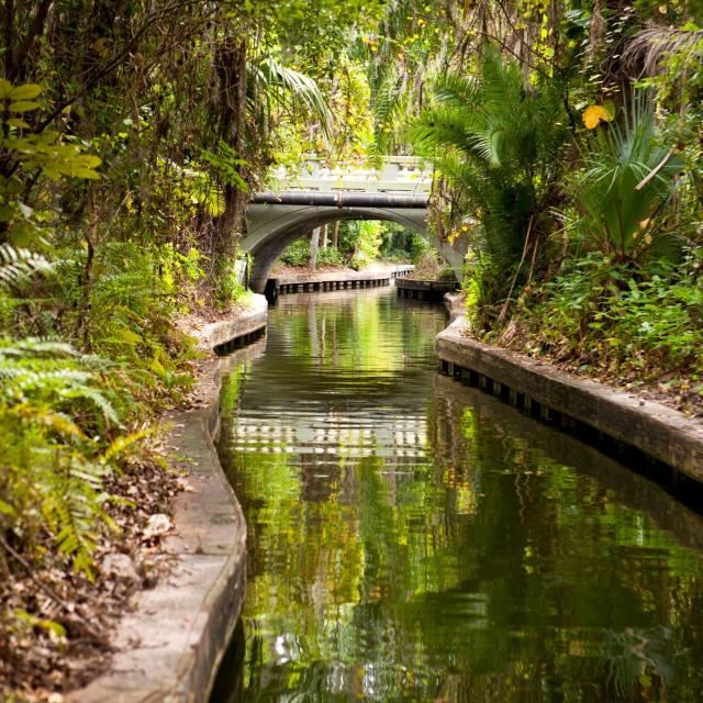 A verdant canal along the Winter Park Scenic Boat Tour