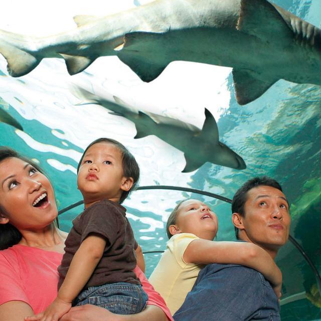 SEA LIFE Orlando Aquarium family looking at sharks