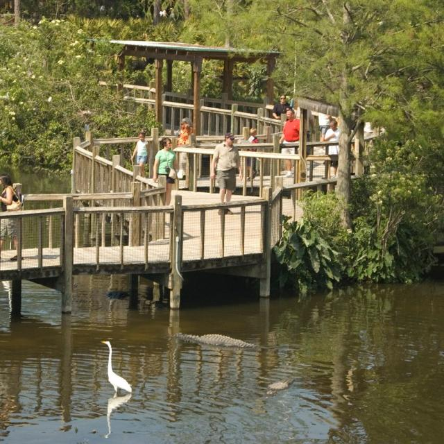 Gatorland boardwalk over a lake with alligators