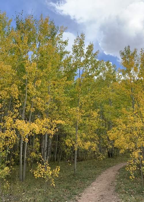 Trail Running Laramie Wyoming