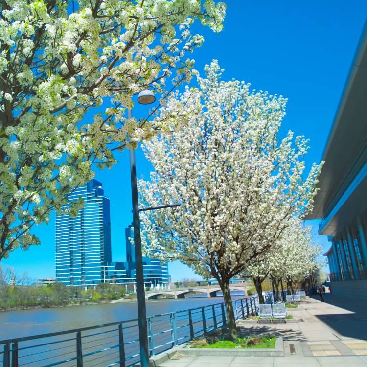 Springtime Along River and DeVos Place