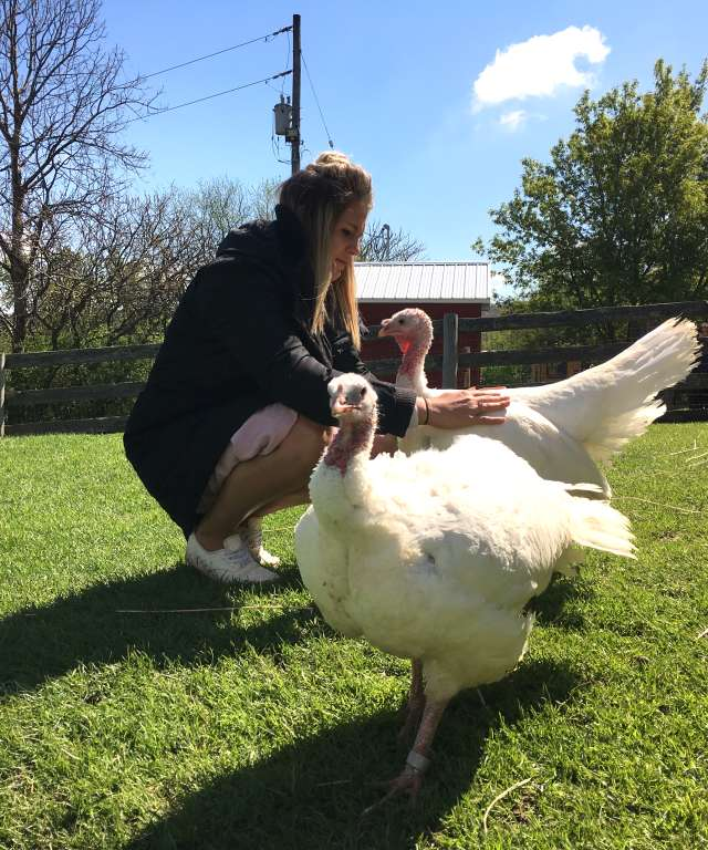 Turkey Tickling