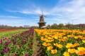Tulip Field in Holland Michigan - Nick Irwin Images