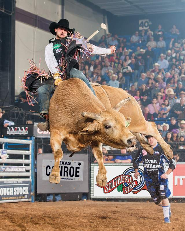 Man riding Brown Bull