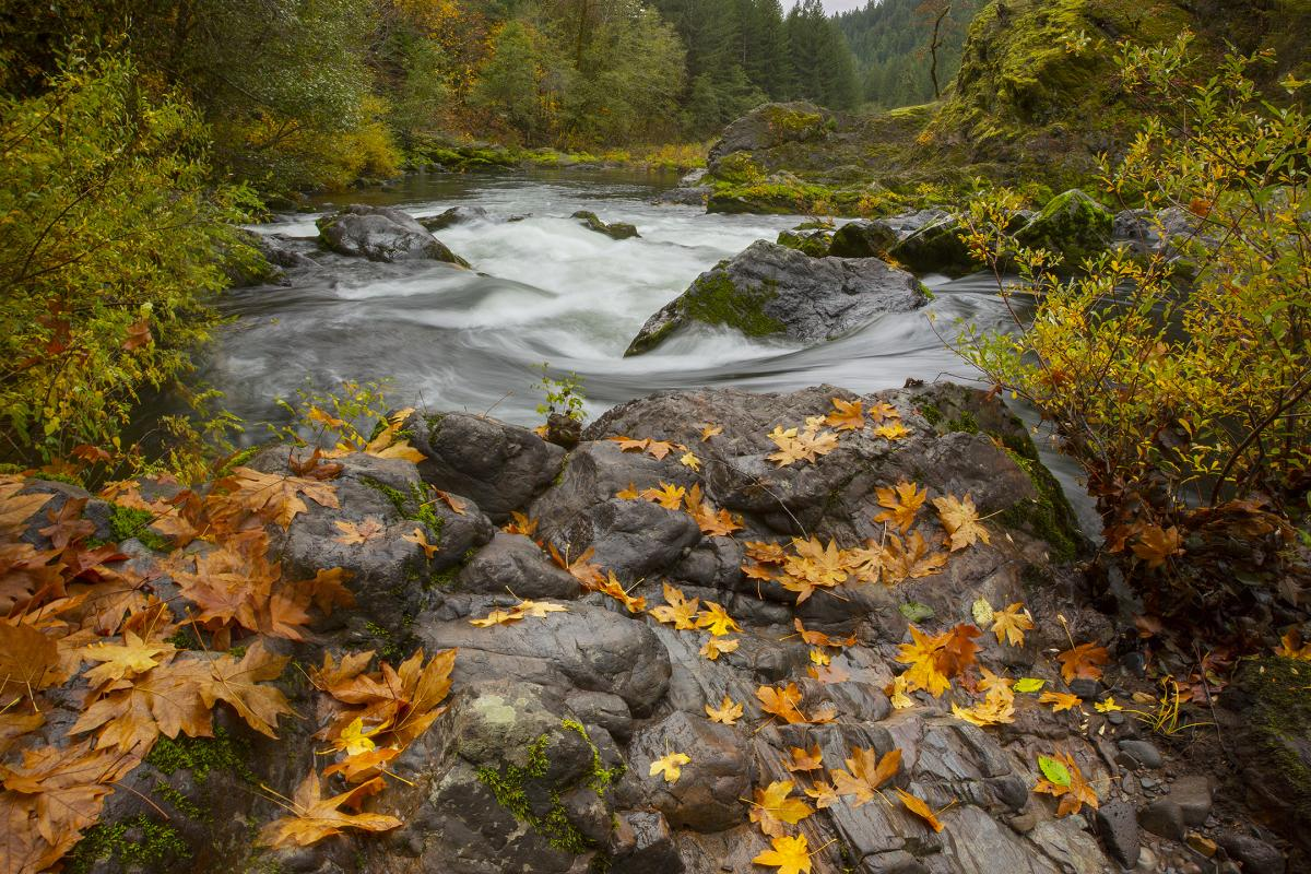 Blue River in the Fall by David Putzier