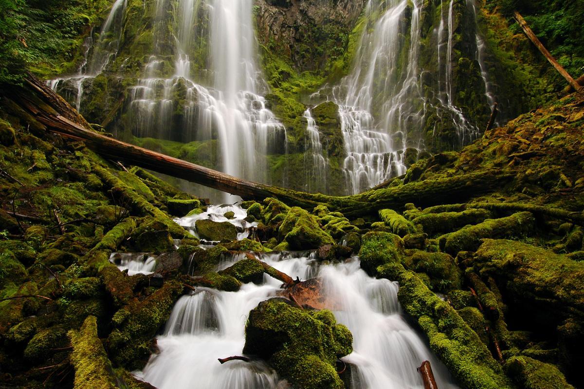 Proxy Falls in McKenzie River Region by Greg Lief