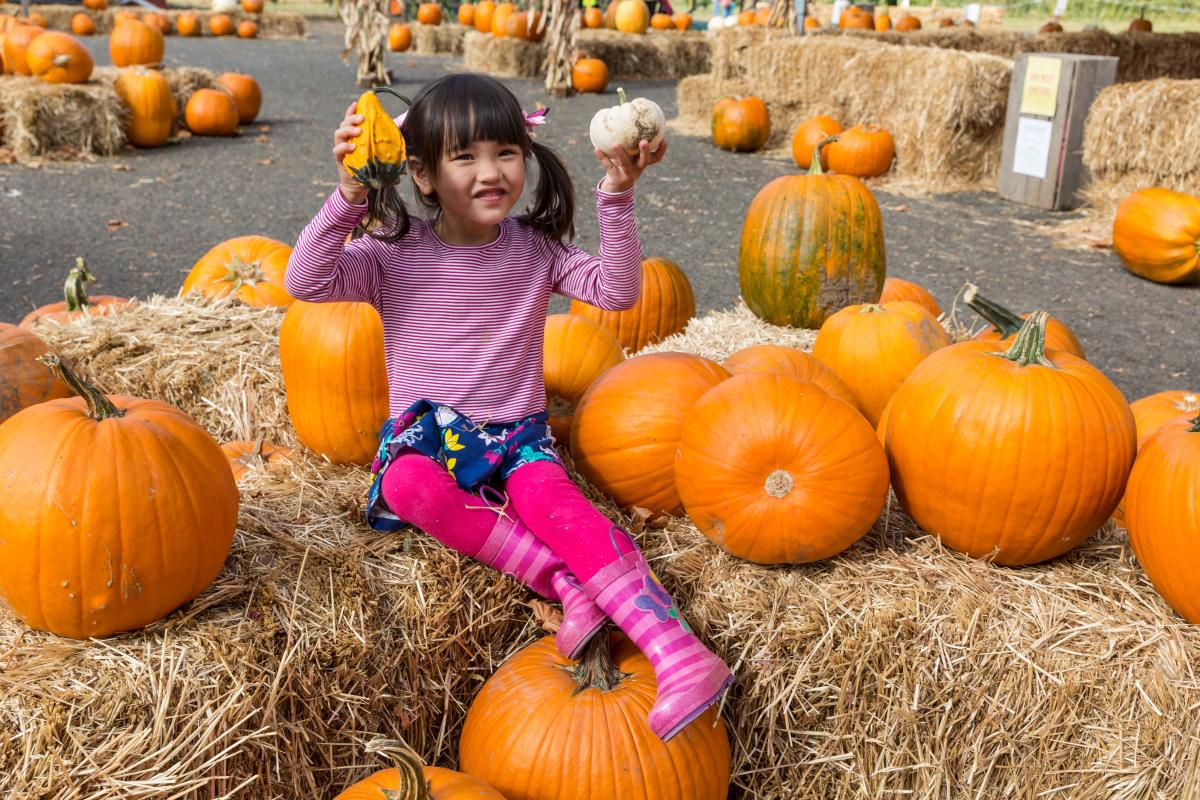 Pumpkin Patch at Detering Orchards by Joni Kabana