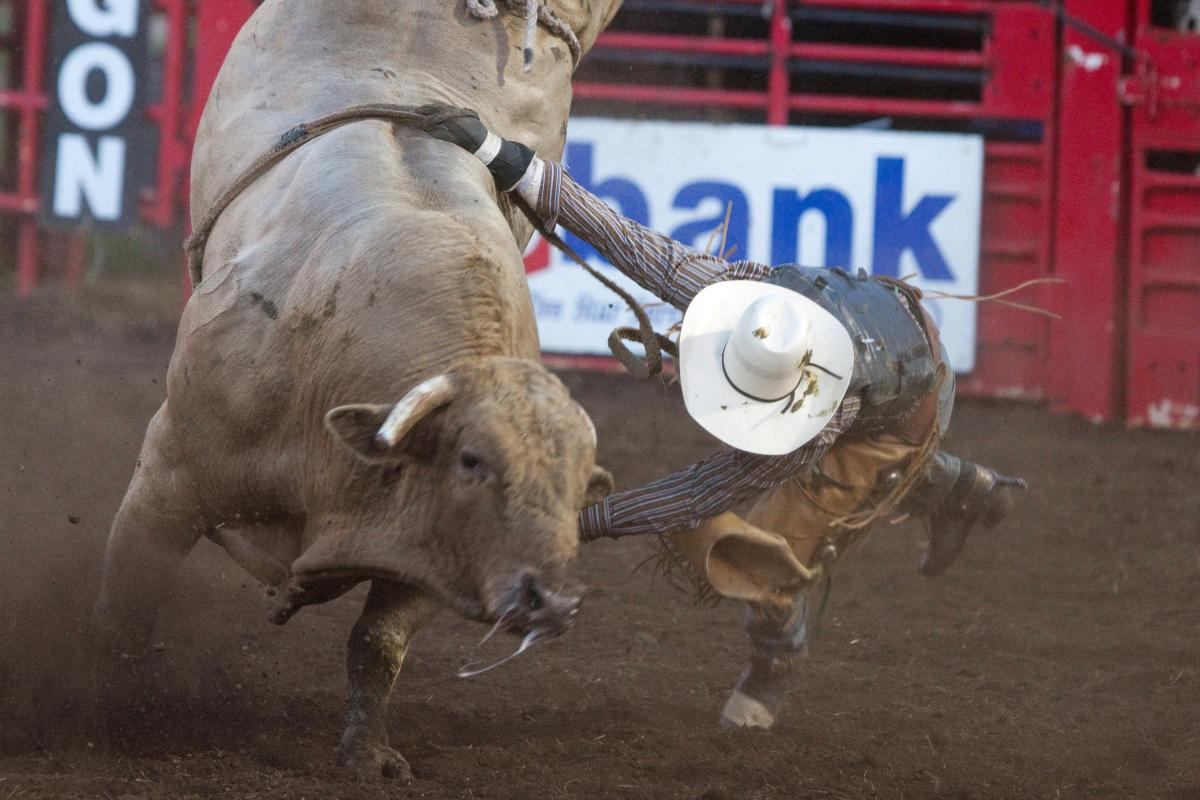 Eugene Pro Rodeo Bull by Jeff Green
