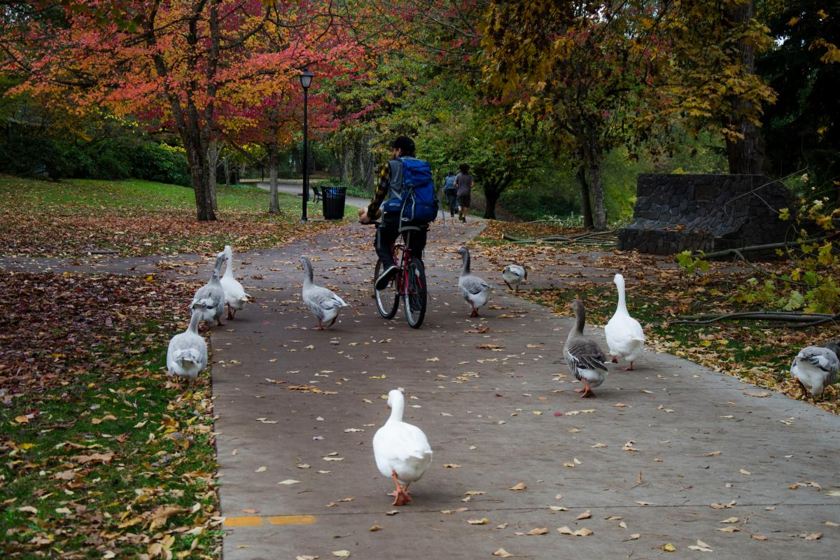 Cycling on the river path in the fall by Katie McGuigan