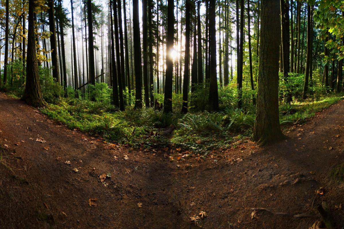 Spencer Butte Trail, Eugene by David Puztier